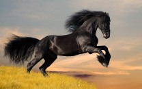 Animals_Wallpapers_Horse_Wallpaper-09