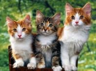 Cat_-63