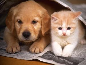 Cute-Cats-012