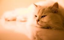 Cute-Cats-015