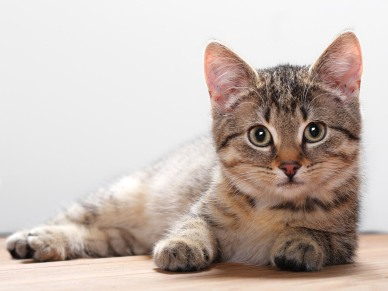 Cute-Cats-068