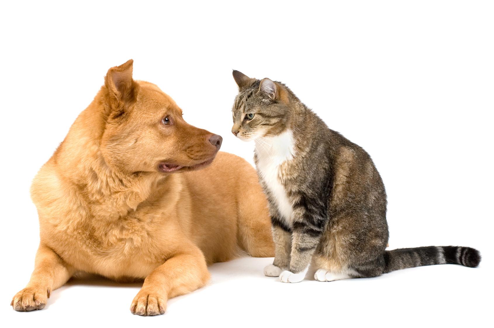contech cat stop cat deterrent