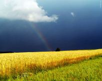 rainbow-1280